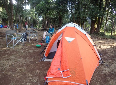 Big Tree Camp | Lemosho Route | Kilimanjaro